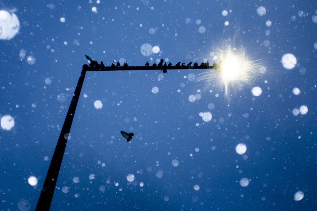 Pigeons take refuge during a cold Monday evening on Colfax Avenue. Nov. 25, 2019. (Kevin J. Beaty/Denverite)