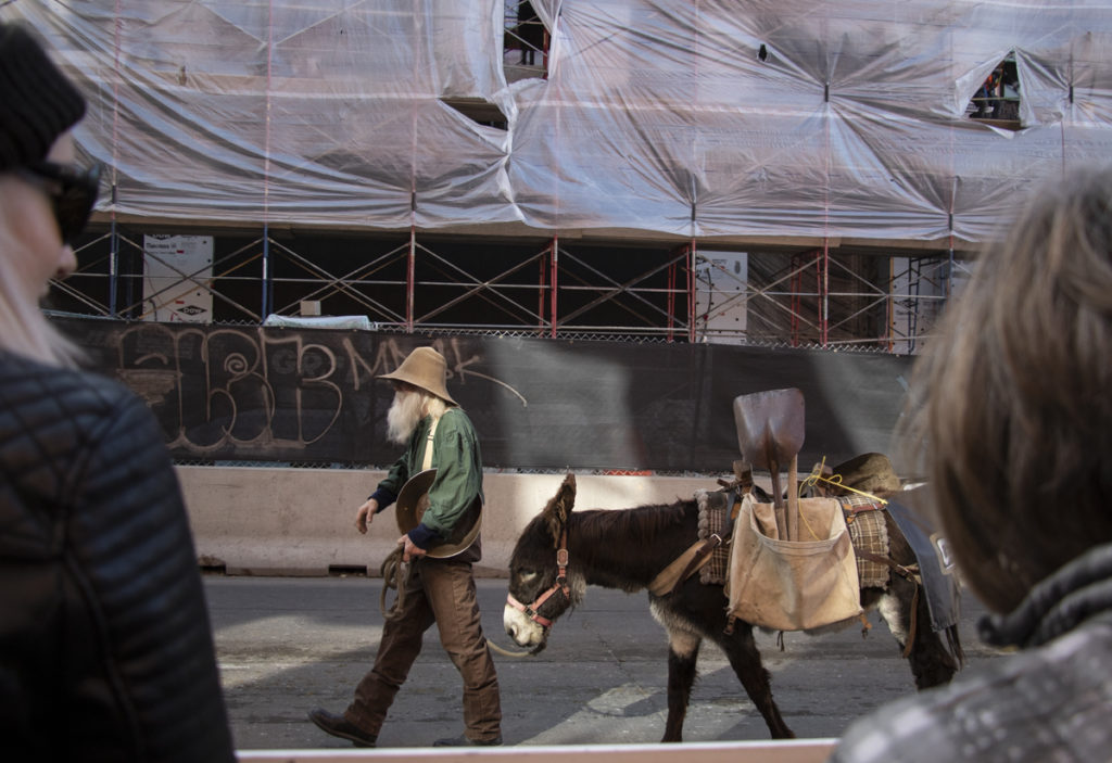 Denver old and new can be seen at the Western Stock Show parade on Jan. 9, 2020 as a man dressed as a gold panner with a donkey marches down 17th Street in front of a residential development. (Lindsay Fendt/Denverite)