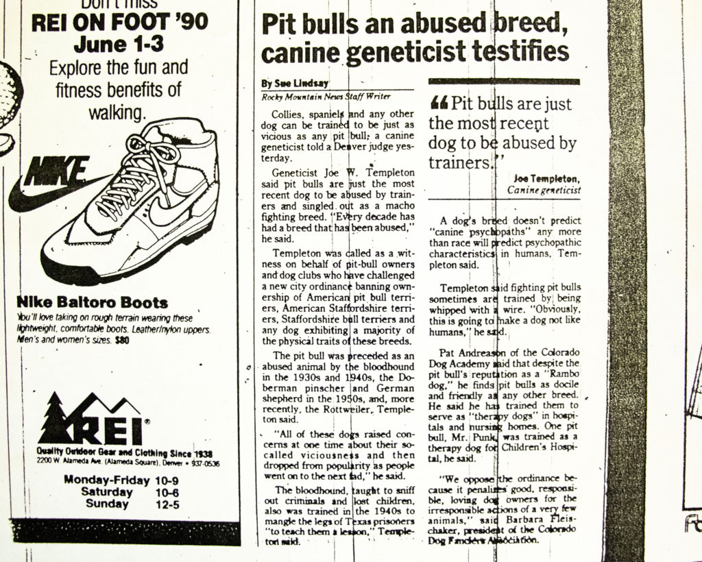 A story in the Rocky Mountain News, written around the time Denver's original pit bull ban. (Denver Public Library/Western History Collection/Clippings Files)
