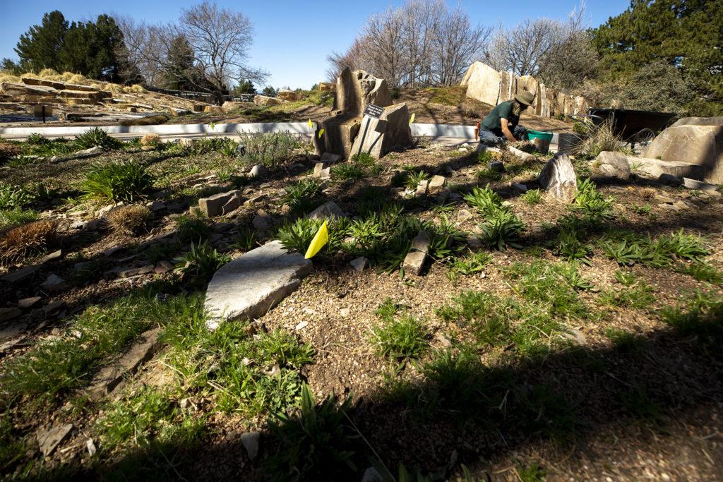 Horticulturalist Kevin Williams at work in the Denver Botanic Gardens, April 7, 2020. (Kevin J. Beaty/Denverite)