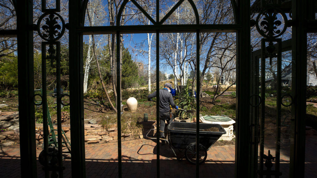 Horticulturalist Mario Bertelmann at work in the Denver Botanic Gardens, April 7, 2020. (Kevin J. Beaty/Denverite)