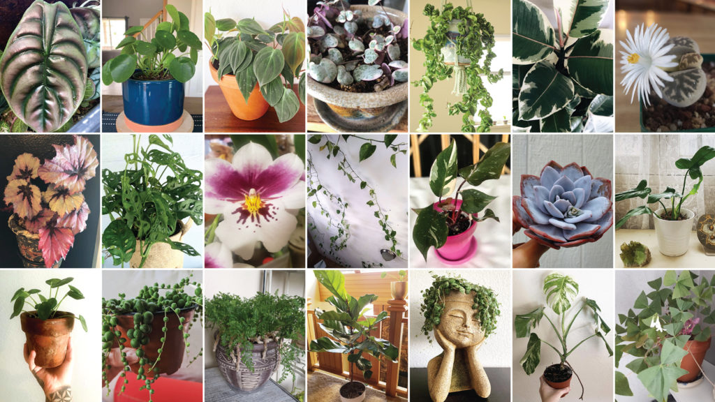 Just a few of the favorite plants submitted by the Colorado Plant Pals. (Courtesy: Colorado Plant Pals)