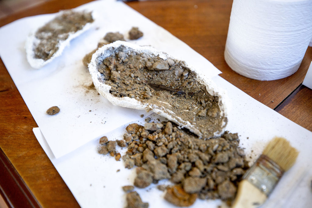 Fossils of a crocodile peek out from some dirt on Natalie Toth's kitchen table. She's the Denver Museum of Nature and Science's chief fossil preparator and working from home. April 27, 2020. (Kevin J. Beaty/Denverite)