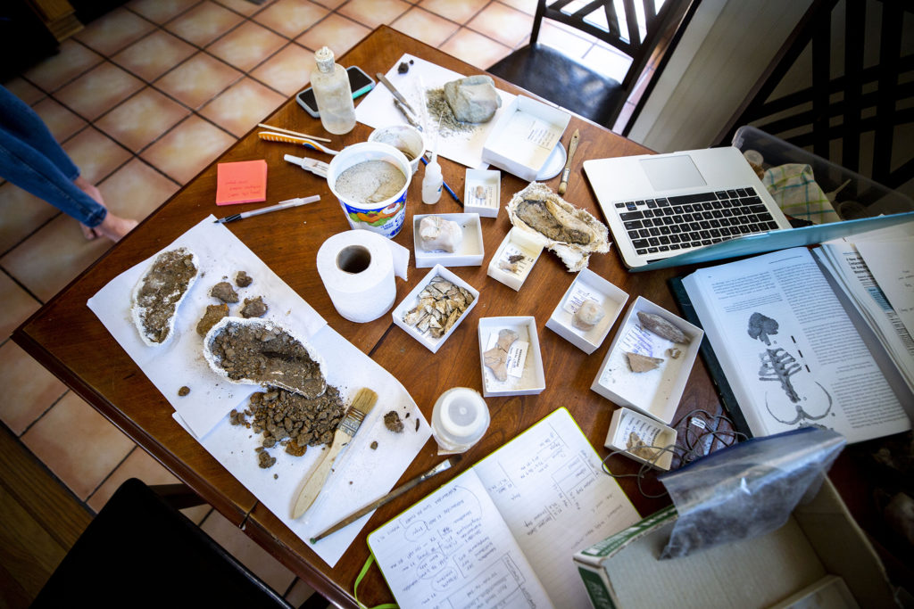 Natalie Toth's at-home fossil preparation lab includes remains of millennia-old creatures, a laptop and toilet paper (which she uses for work). April 27, 2020. (Kevin J. Beaty/Denverite)