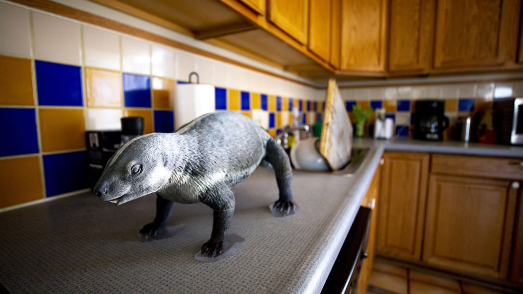 A 3D-printed model of an Adalatherium, whose discovery was recently announced by the Denver Museum of Nature and Science, sits in Natalie Toth's kitchen. She's the Denver Museum of Nature and Science's chief fossil preparator and working now from home. April 27, 2020. (Kevin J. Beaty/Denverite)