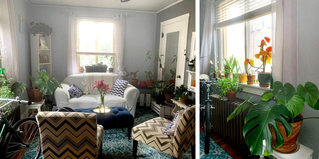 Beza Taddess' home is full of plants. (Courtesy)