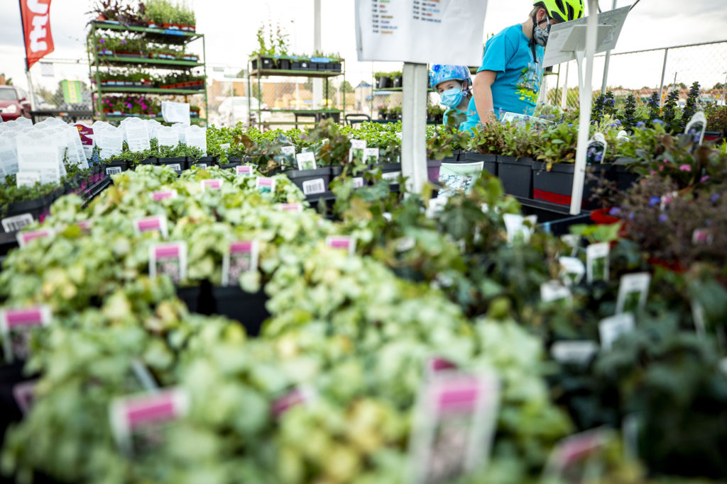 Anya McKinzie peers past her brother, Jacob, in a greenhouse at Plumb Creek Garden Market's Denver pop-up at Monaco Parkway and Evans Avenue. Goldsmith, May 14, 2020. (Kevin J. Beaty/Denverite)