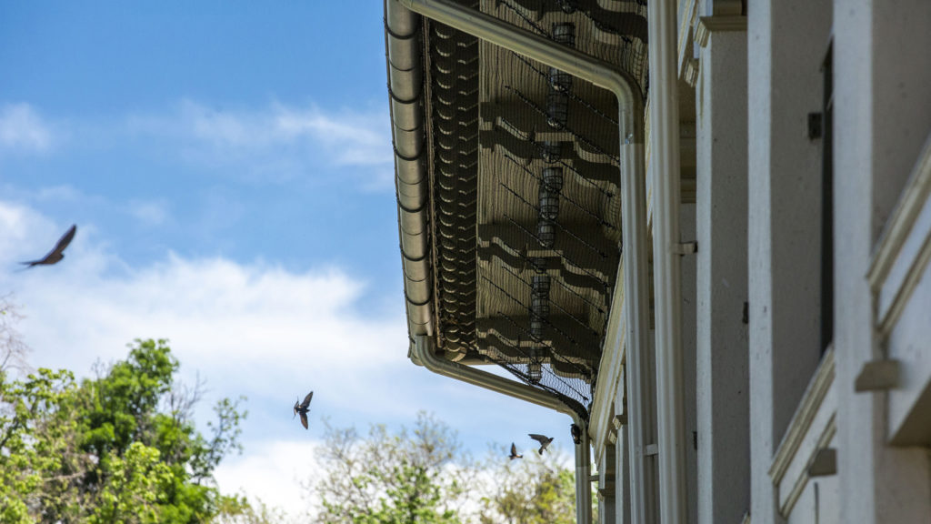 Possibly frustrated swallows fly around the Washington Park boathouse, which recently has had its eaves netted to keep the birds from making mud nests as they usually do. May 21, 2020. (Kevin J. Beaty/Denverite)