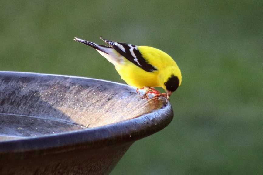 A little finch spotted in the Virginia Village neighborhood. (Courtesy of Scott Sebern)