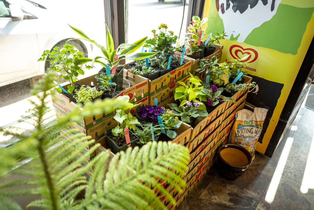 Plants on sale at Capitol Convenience in Capitol Hill. May 28, 2020. (Kevin J. Beaty/Denverite)