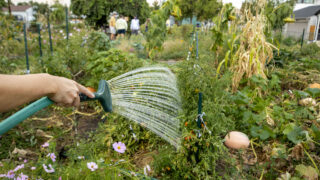 Michelle Cyr waters her expansive plot at the El Oasis community garden in Denver's Highland neighborhood. Sept. 25, 2020.