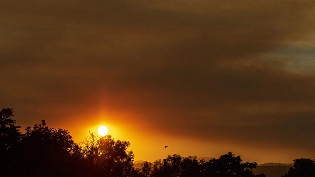 A wildfire sunset over Denver's Mar Lee neighborhood. And a bird. Oct. 1, 2020.