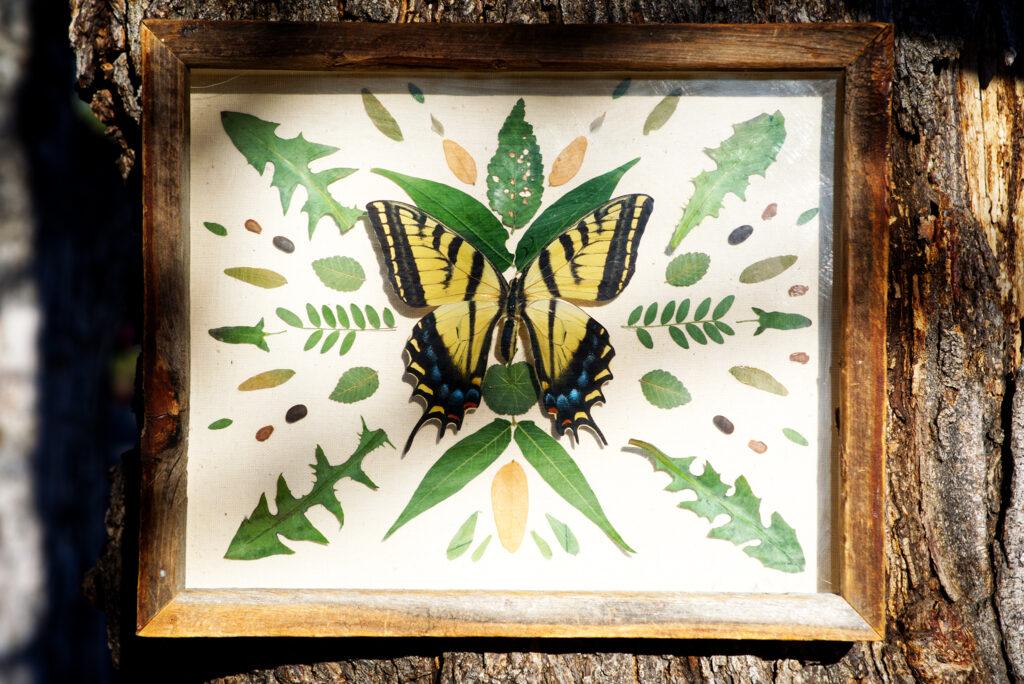 Entomological art by Efrain Leal Escalera.