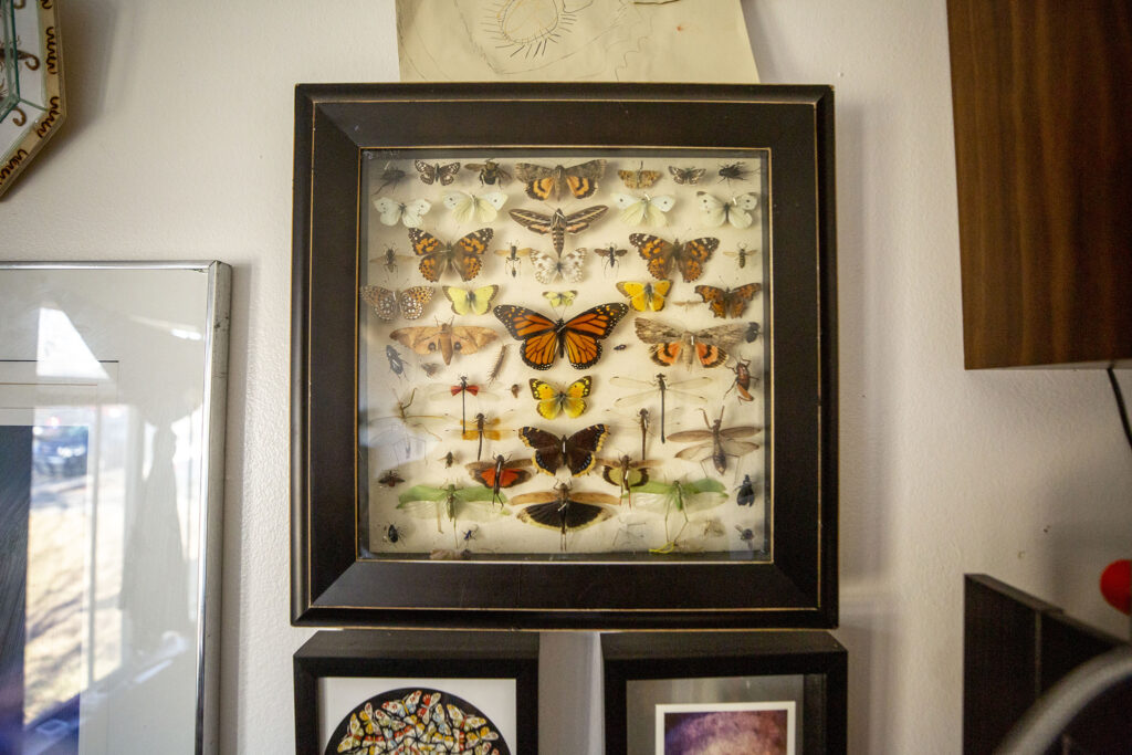 A shadow box Efrain Leal Escalera constructed with (already dead) bugs he found near his home in Aurora. Dec. 26, 2020.