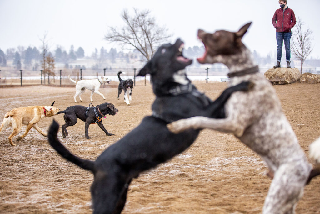 Mayhem at the Berkeley Lake dog park. Jan. 9, 2020.