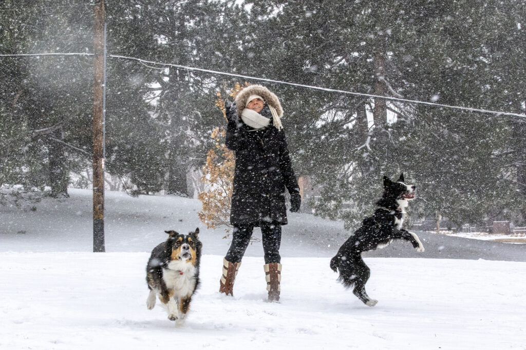 Maggie Siple plays Catch with her dogs Zoey (right) and Bailey on a snowy day in Rosedale Park.  January 26, 2021.
