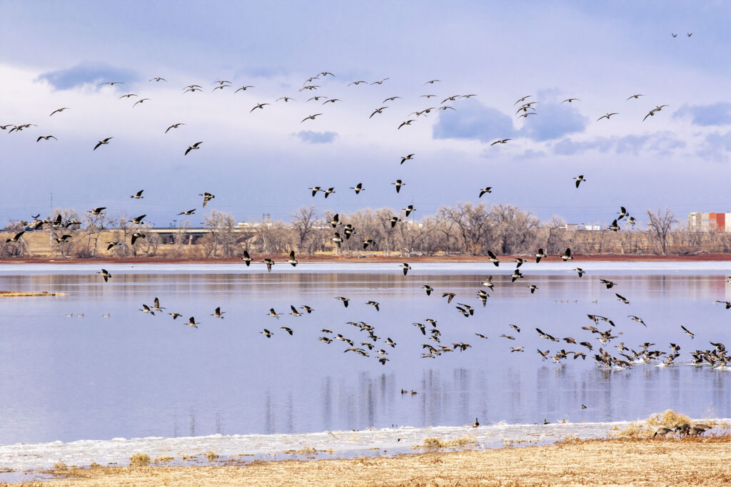Barr Lake State Park. Feb. 6, 2021.