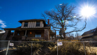 A giant English oak towering over Milwaukee Street in Cherry Creek is about to be cut down. Feb. 23, 2021.