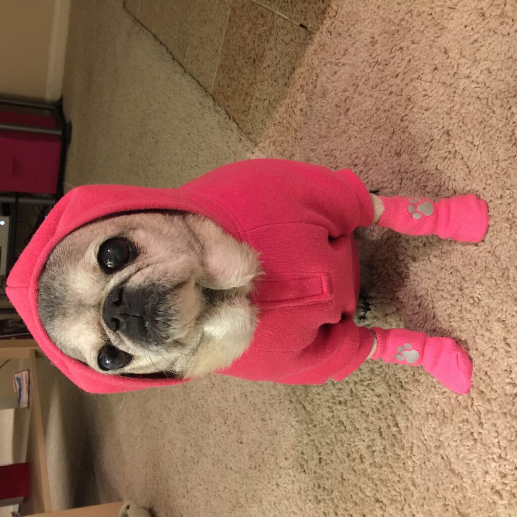 """Hailey the pug loved """"tarot reading, judging outfits, napping in the sun, reading the Sunday NYT travel section and appreciating Werner Herzog filmography."""""""