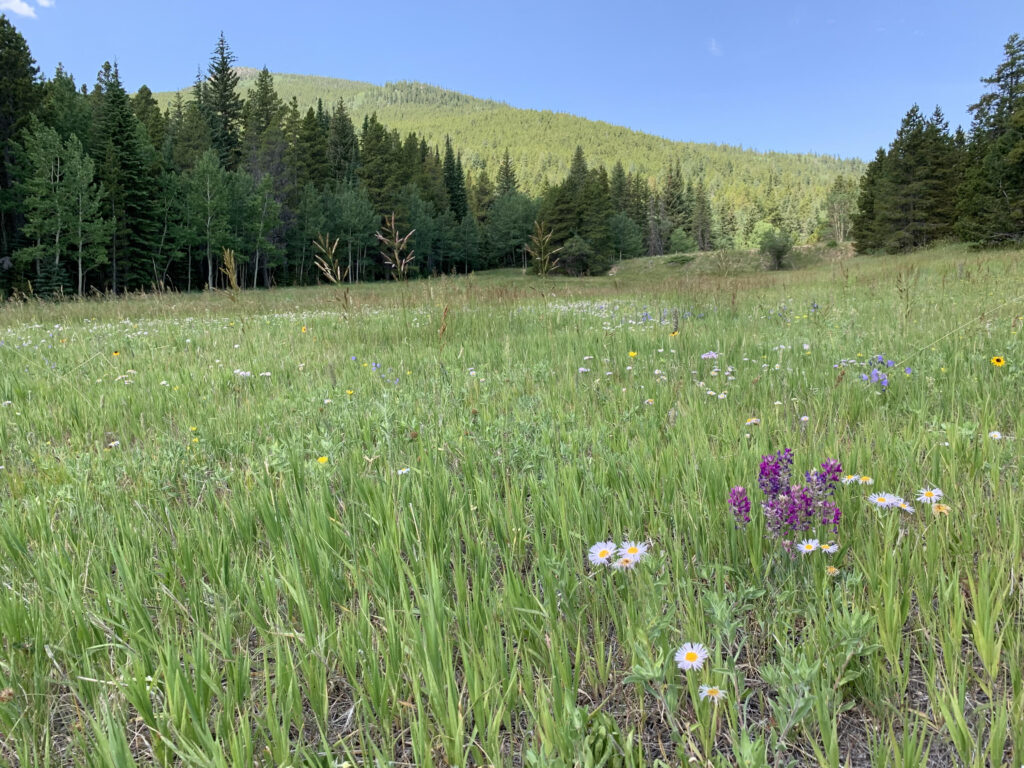 Axton Ranch. Photo courtesy of Scott Gilmore, deputy director of Denver Parks and Recreation.