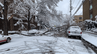 Heavy, wet snow felled a tree branch around 13th Ave. & Franklin St. in Denver, April 16, 2021.