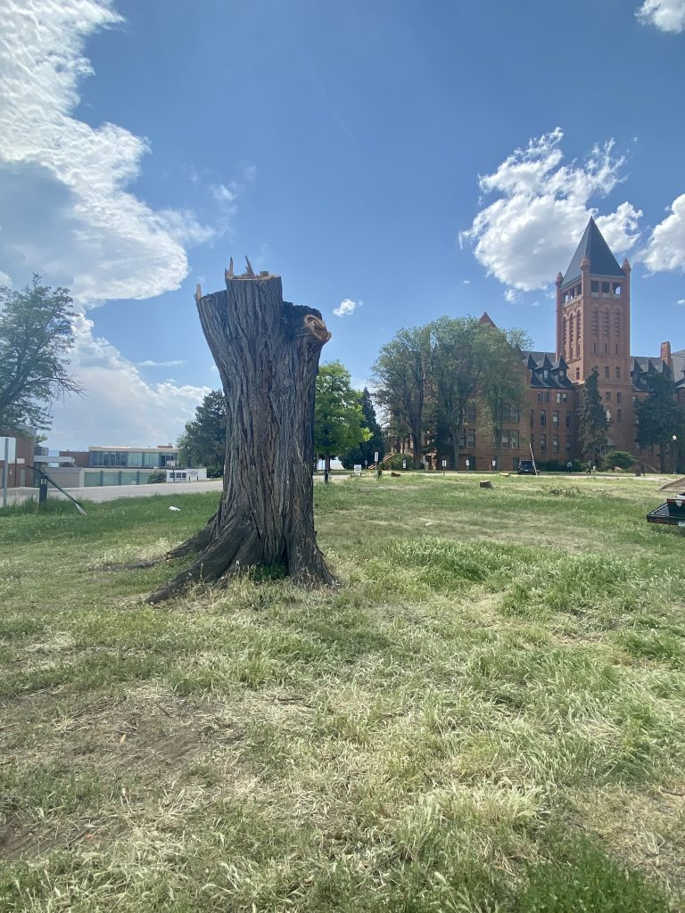 A cut down tree in front of the Loretto Heights campus. June 13, 2021.