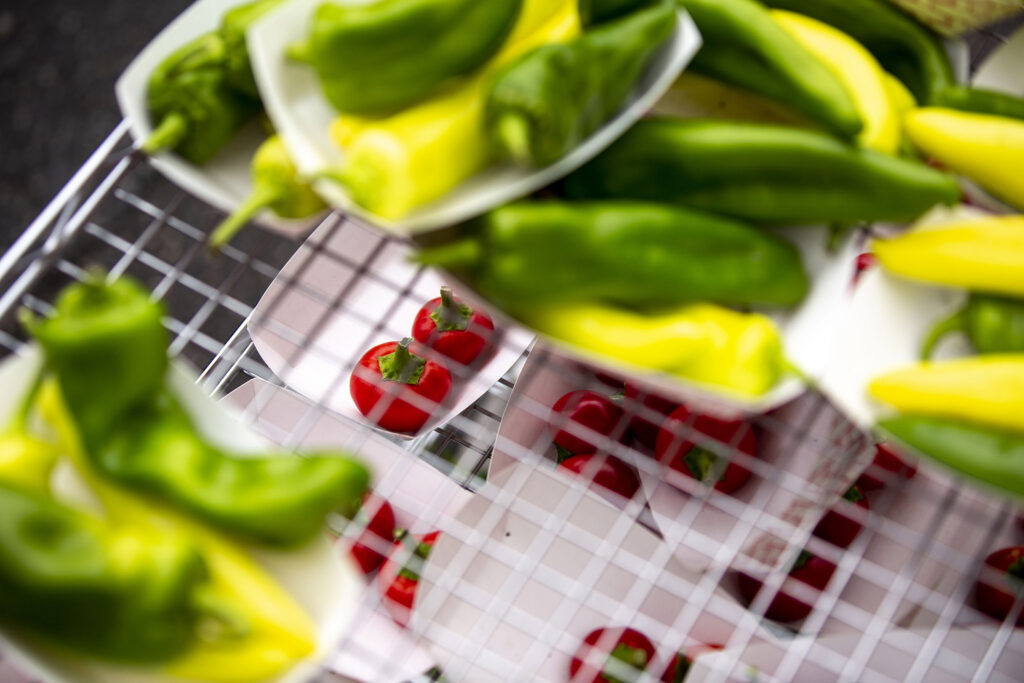 Hot chiles, grown off Morrison Road, on deck for a chile eating contest at the  Westwood Chile Fest. Sept. 11, 2021.