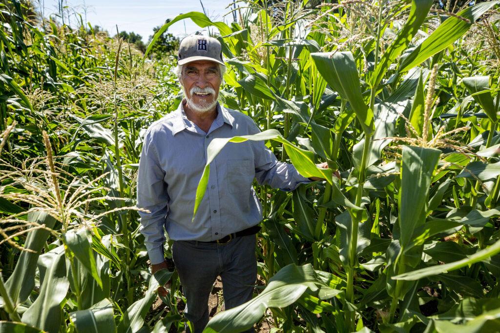 David de Santiago, farm manager with Re:Vision, stands among the nonprofit's corn rows off Morrison Road. Westwood, Sept. 21, 2021.