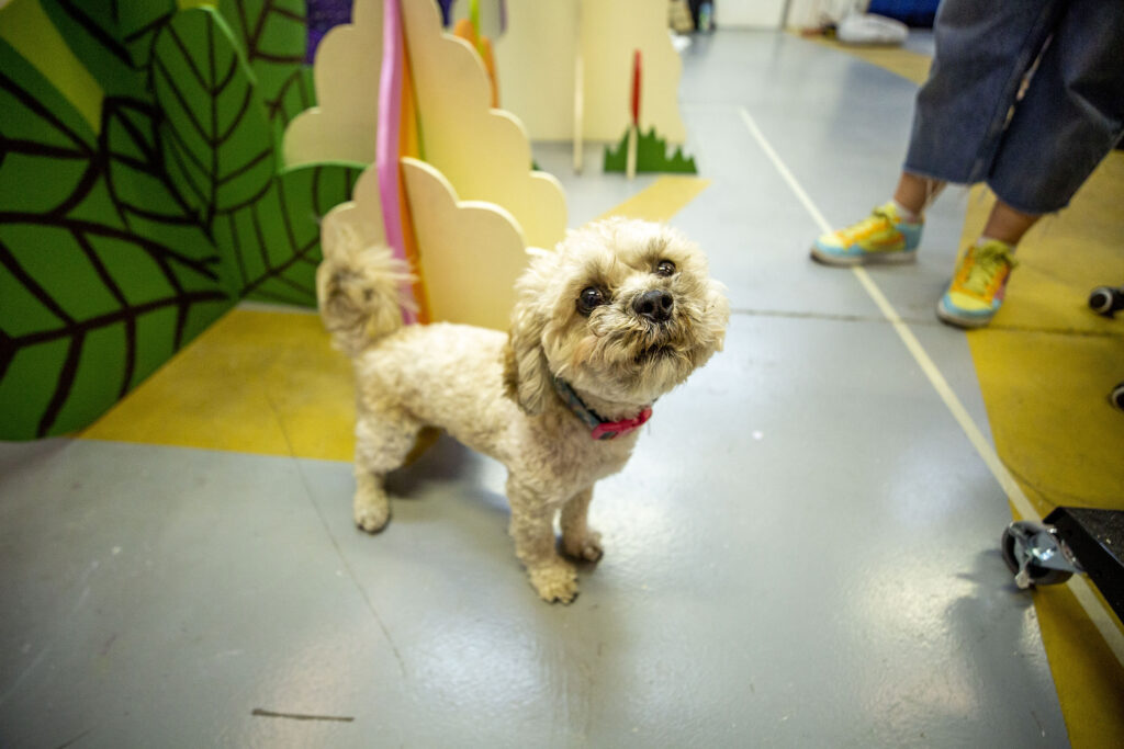 Wiggles the dog is a good guard dog. Rainbow Dome's Valverde workshop, Oct. 5, 2021.